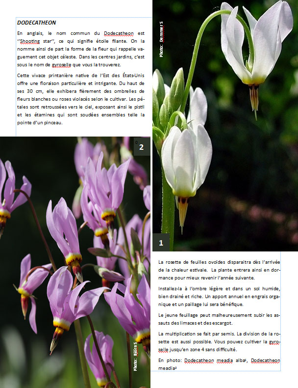 Plantes d'ombre - magazine - Page 11 Dodeca10