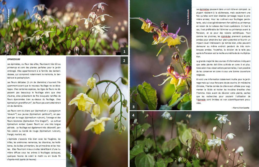 Plantes d'ombre - magazine - Page 2 Epimed11