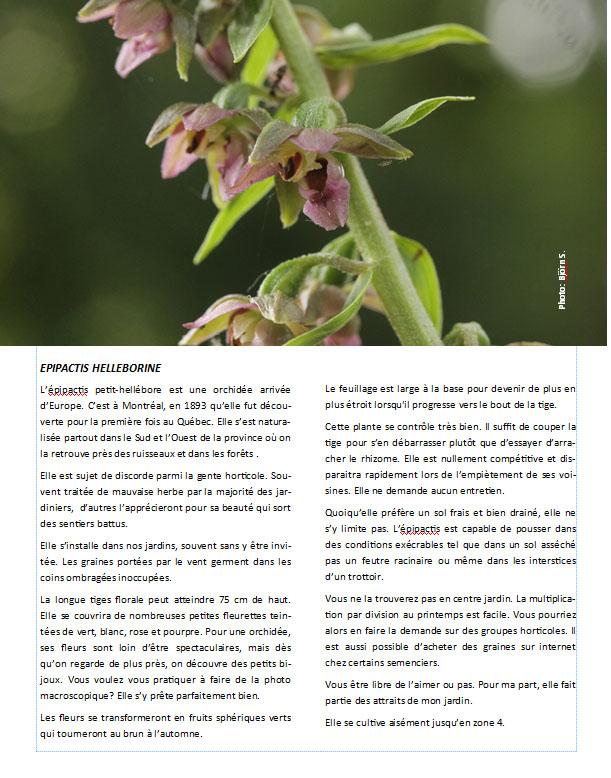 Plantes d'ombre - magazine - Page 11 Epipac10