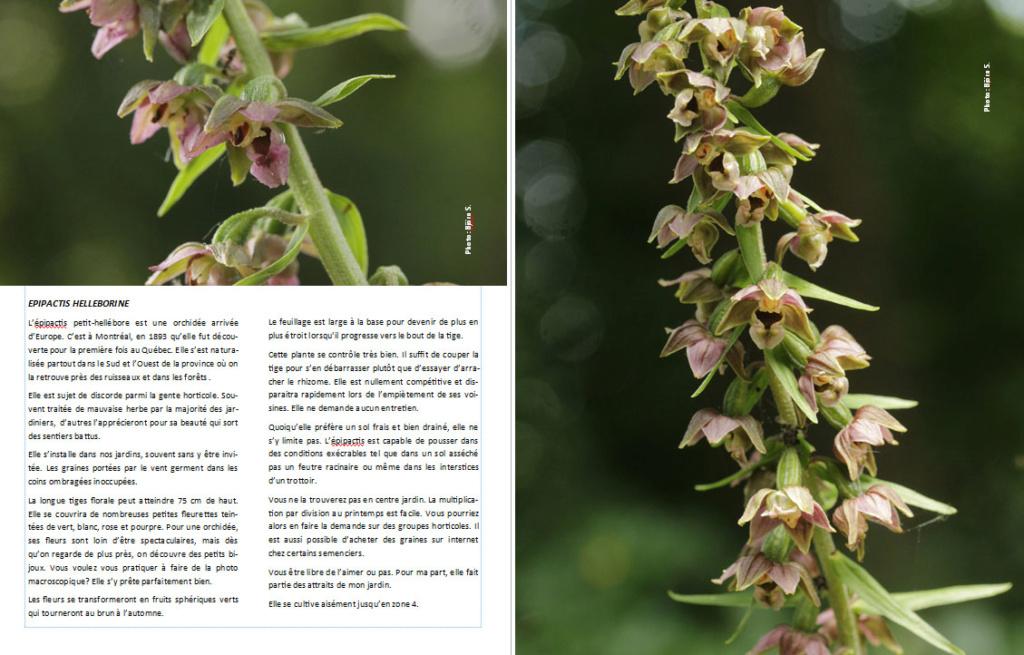 Plantes d'ombre - magazine - Page 11 Epipac11