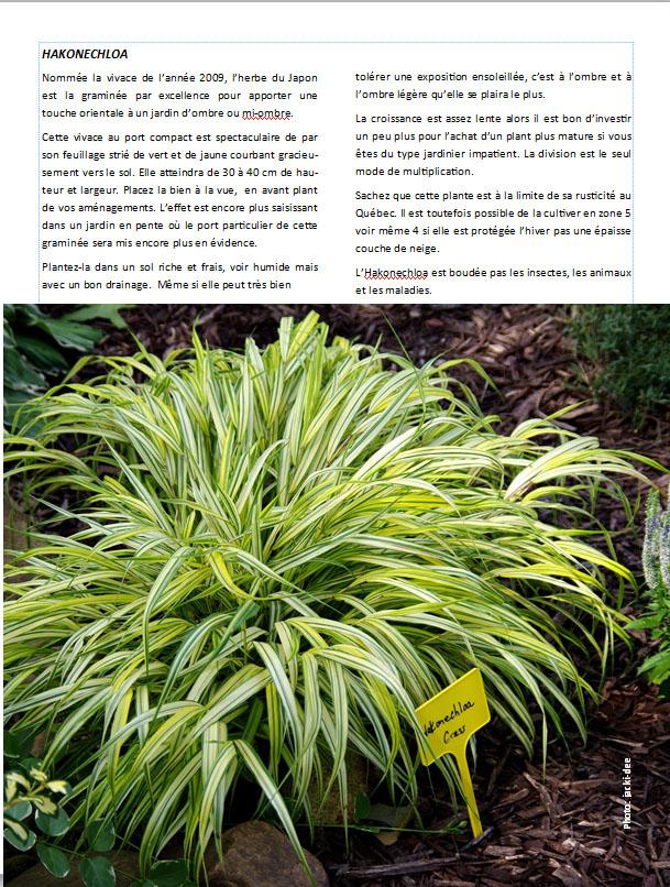 Plantes d'ombre - magazine - Page 10 Hako10