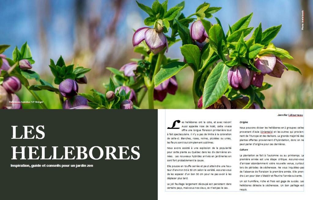 Plantes d'ombre - magazine - Page 4 Helleb10