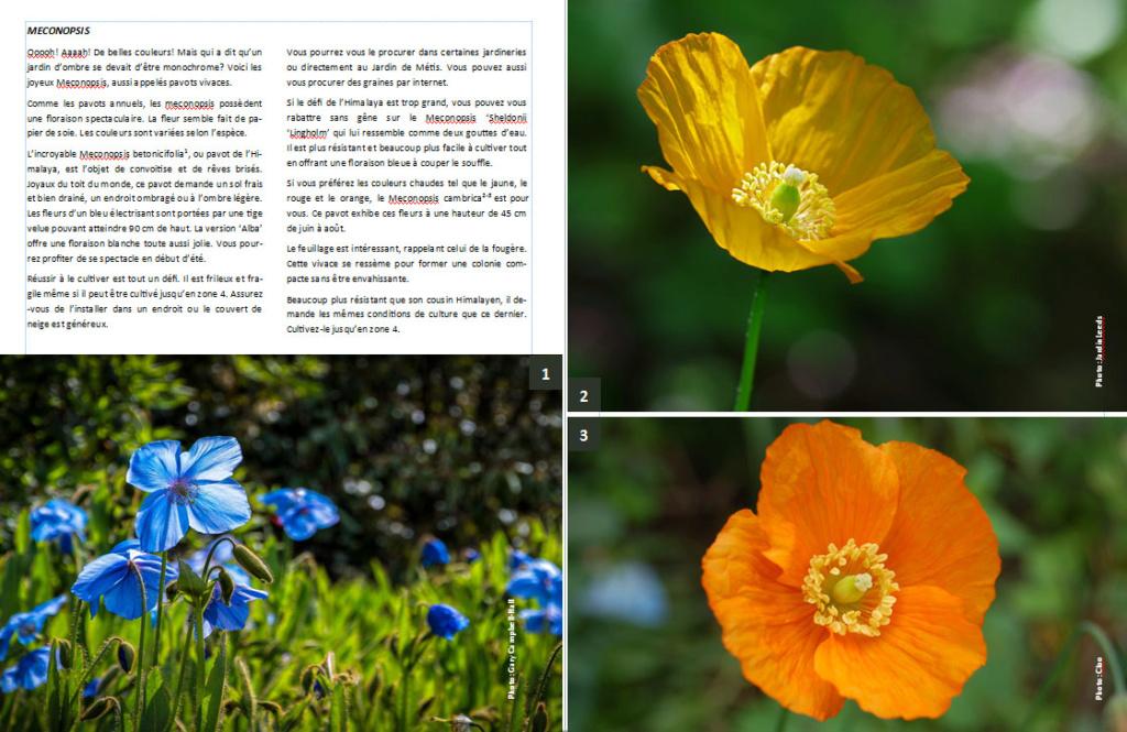 Plantes d'ombre - magazine - Page 10 Mecono10