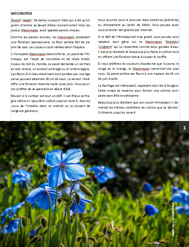Plantes d'ombre - magazine - Page 10 Mecono12