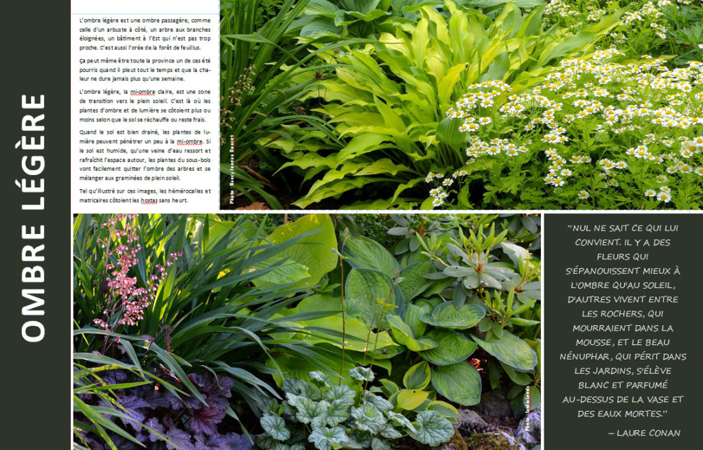 Plantes d'ombre - magazine - Page 4 Ombre210