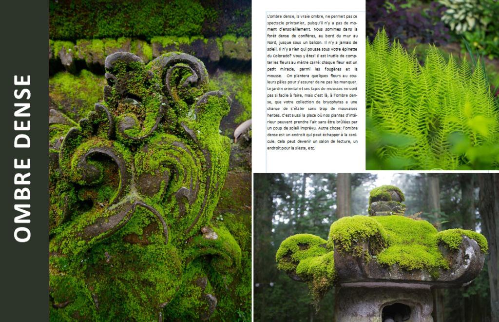 Plantes d'ombre - magazine - Page 4 Ombre410