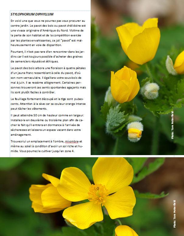 Plantes d'ombre - magazine - Page 12 Pavots10