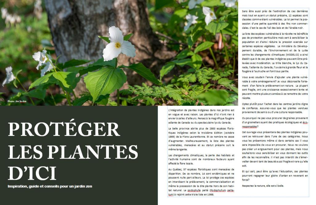 Plantes d'ombre - magazine - Page 10 Proteg10