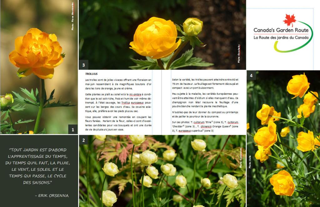 Plantes d'ombre - magazine - Page 2 Trolle11