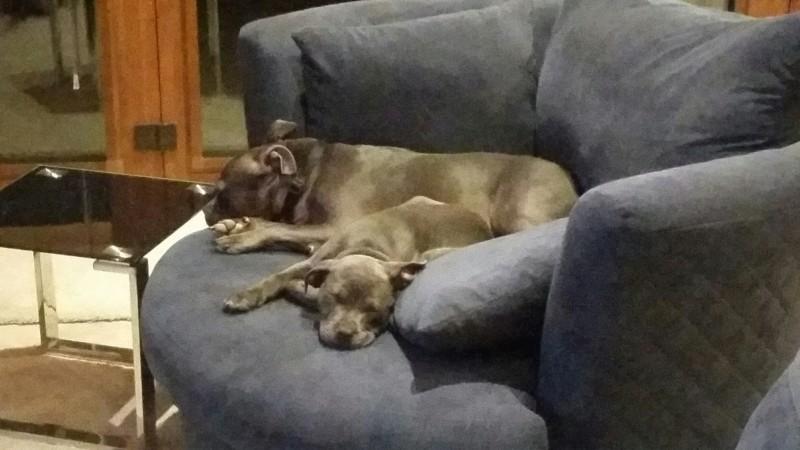 Dory the Lazy Puppy 20181020
