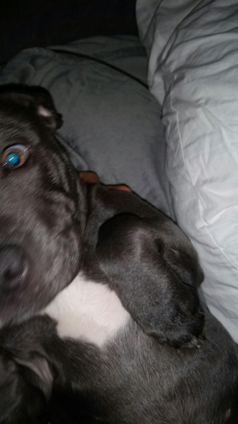 Dory the Lazy Puppy 20181023