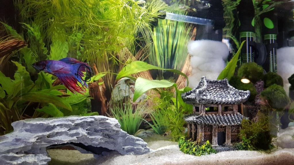 Présentation Mamillum et son petit aquarium 20021510