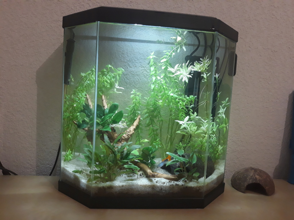 Mon bac aqua 30 litres led Aqua_11