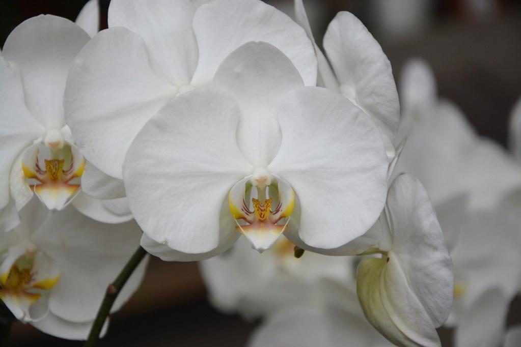 Свободное общение форумчан - Страница 6 Flower10