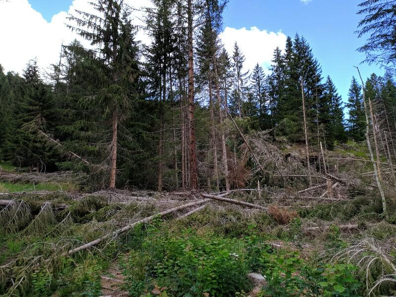 alberi abbattuti dai temporali - Pagina 2 Img_2017