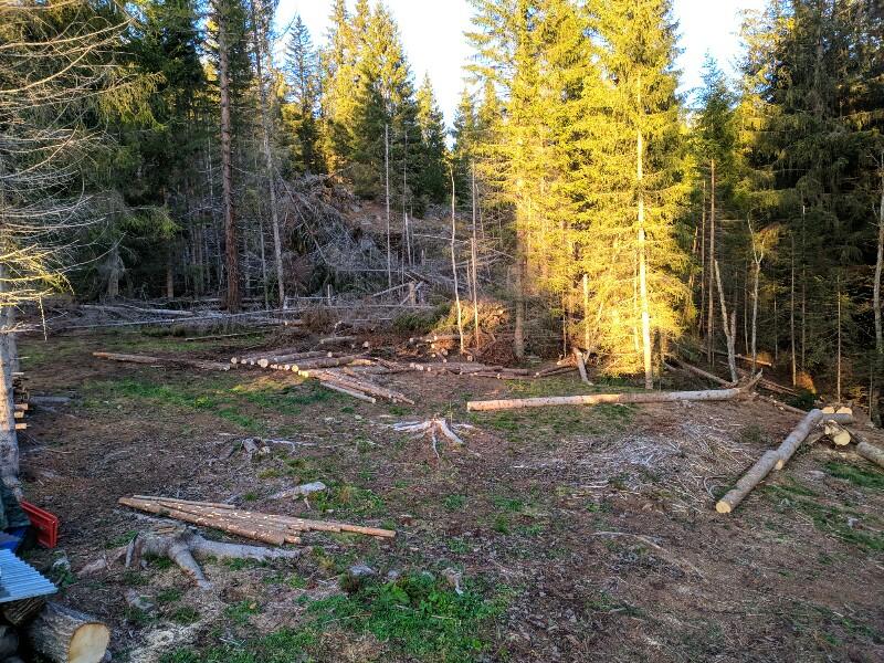 alberi abbattuti dai temporali - Pagina 2 Img_2018
