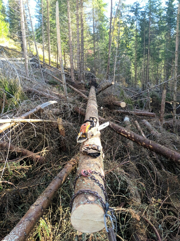 alberi abbattuti dai temporali - Pagina 2 Img_2019