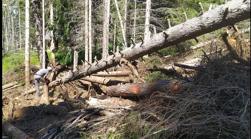 alberi abbattuti dai temporali - Pagina 2 Img_2029