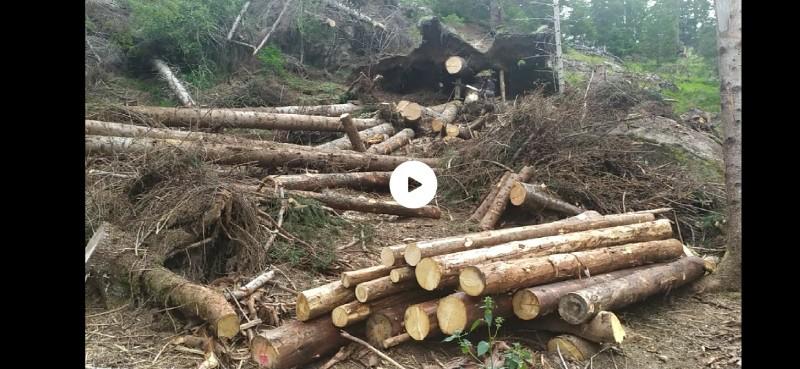 alberi abbattuti dai temporali - Pagina 2 Img_2030