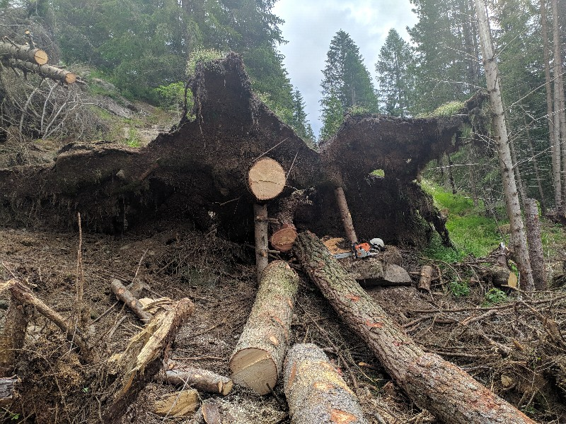 alberi abbattuti dai temporali - Pagina 2 Img_2031