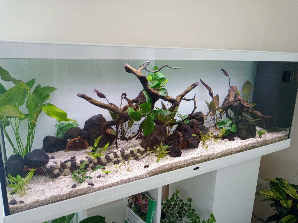 Débutant nouvel aquarium 15891111