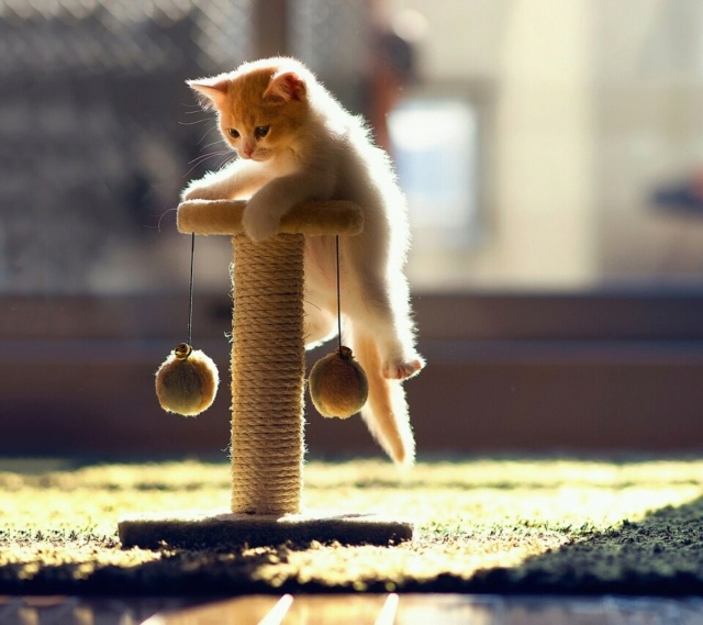Когтедёрка для кошки своими руками 91567210