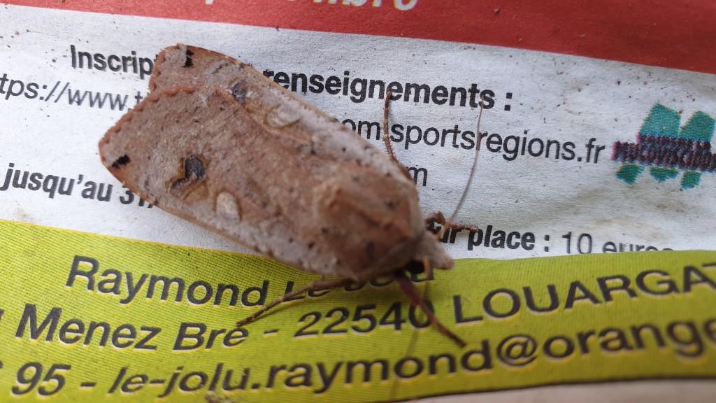 Identification papillon  20210714
