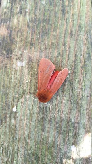 Identification papillon  20210914