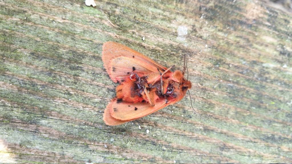 Identification papillon  20210915