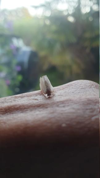 Identification papillon  20210916