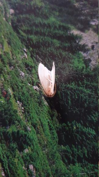 Identification papillon  20210918