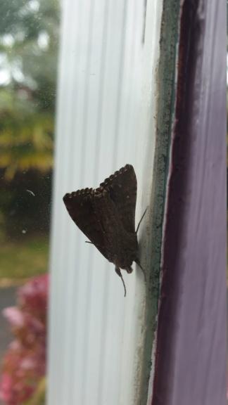 Identification papillon  20210919