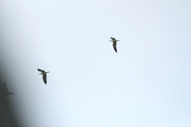 Oiseaux  Img_5813