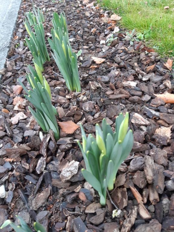 Erste Frühlingsboten im Garten und in Wald und Flur, Teil 2 20210212