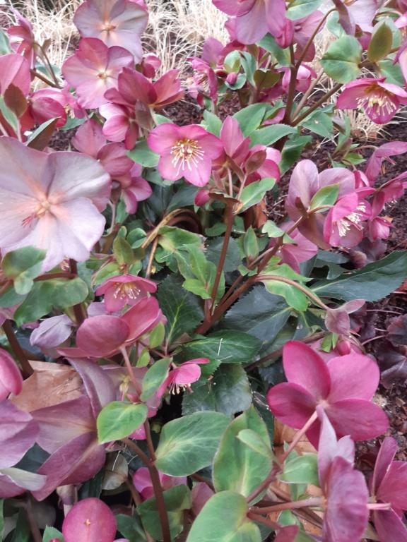 Erste Frühlingsboten im Garten und in Wald und Flur, Teil 2 20210213
