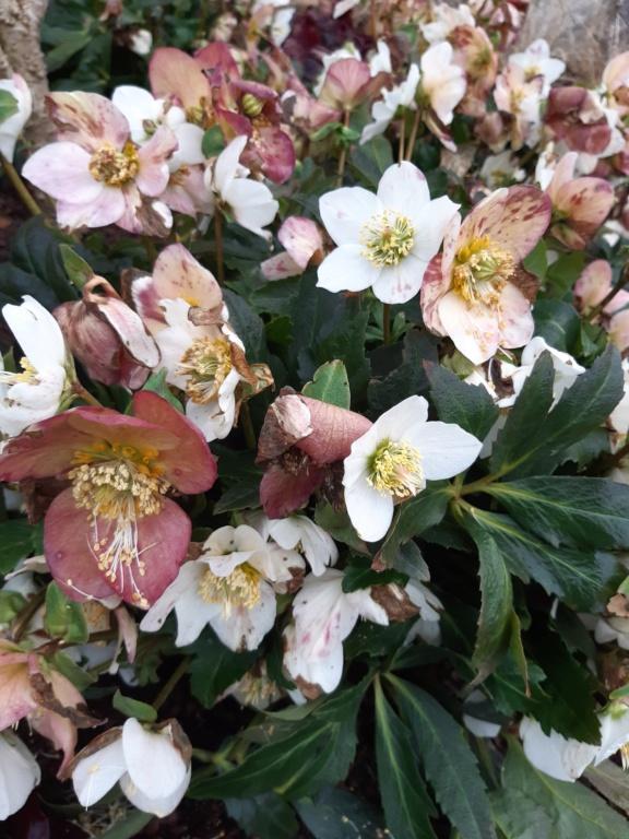 Erste Frühlingsboten im Garten und in Wald und Flur, Teil 2 20210214