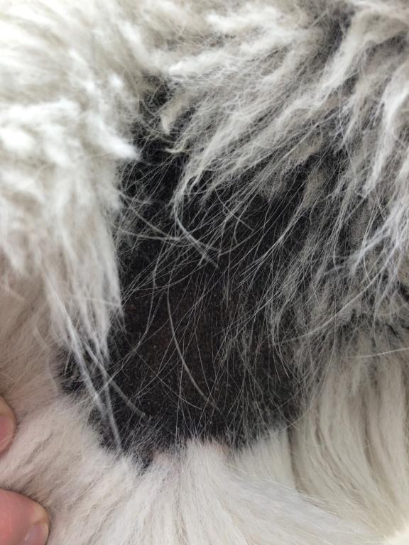 Hair Loss - a lot Img_0418