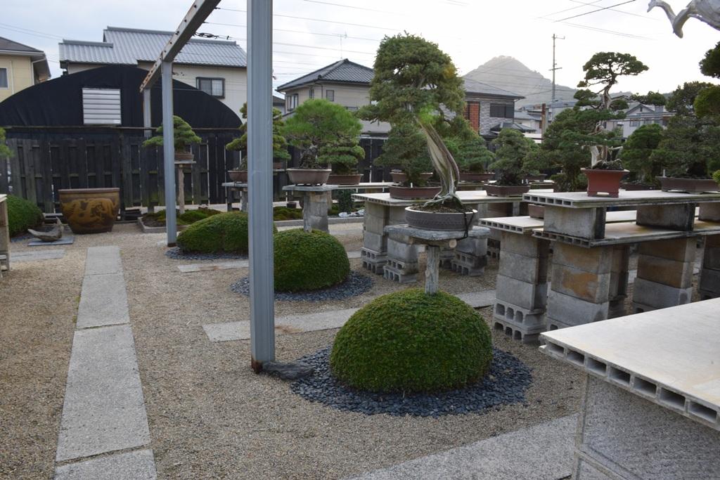 Voyage au Japon, à Kinashi Dsc_0305