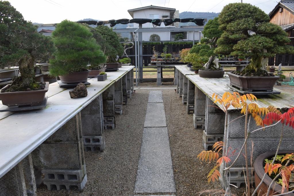 Voyage au Japon, à Kinashi Dsc_0307