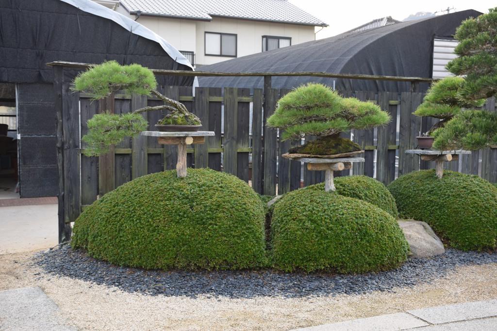 Voyage au Japon, à Kinashi Dsc_0309