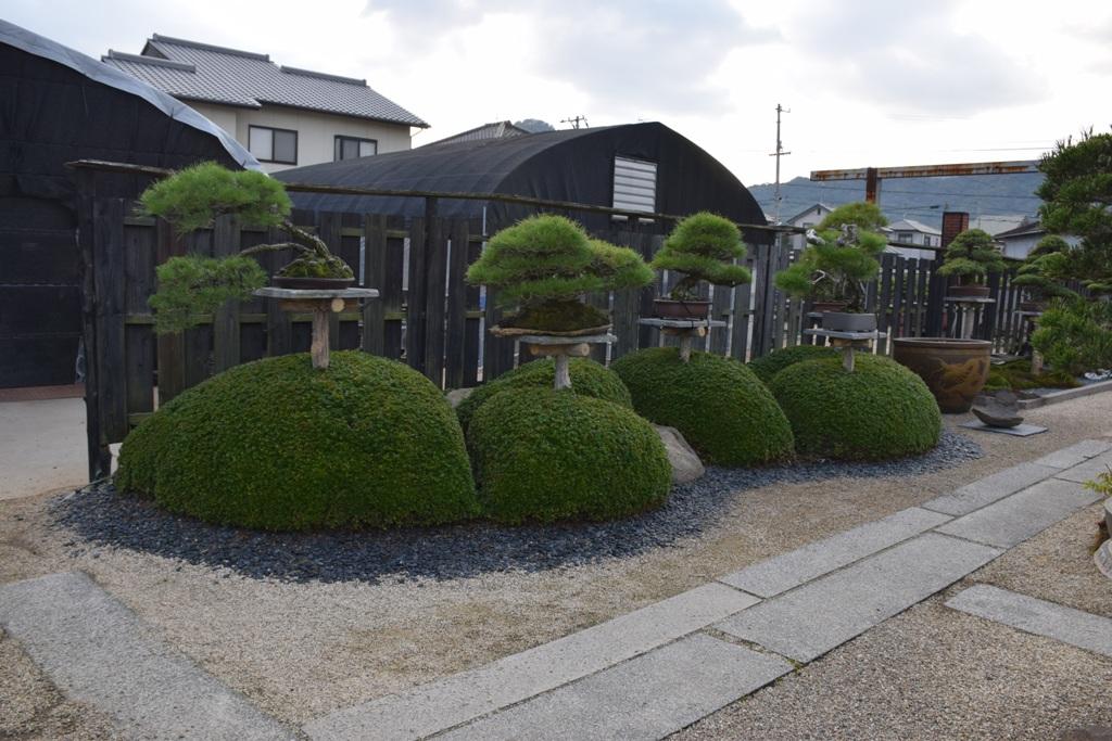 Voyage au Japon, à Kinashi Dsc_0391