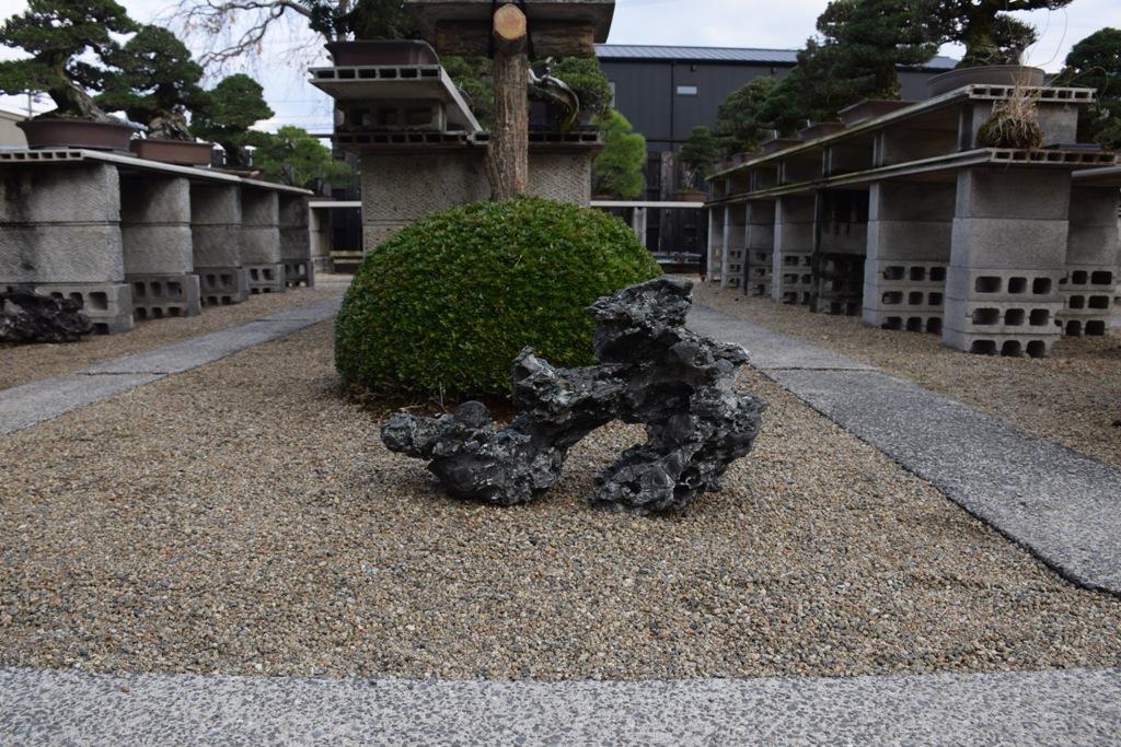 Voyage au Japon, à Kinashi Dsc_0396
