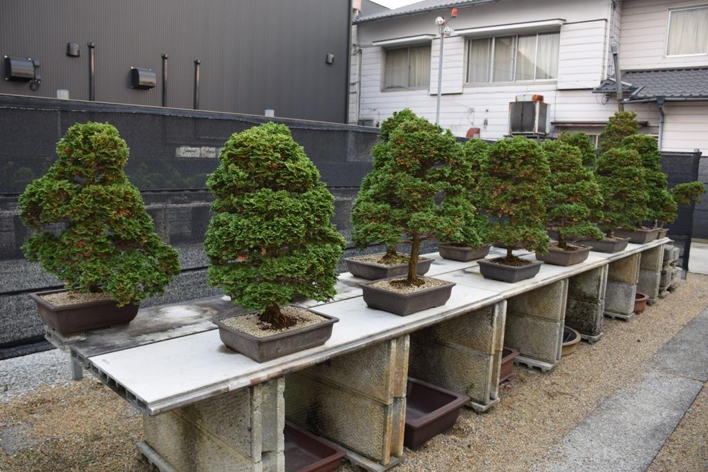 Voyage au Japon, à Kinashi Dsc_0405