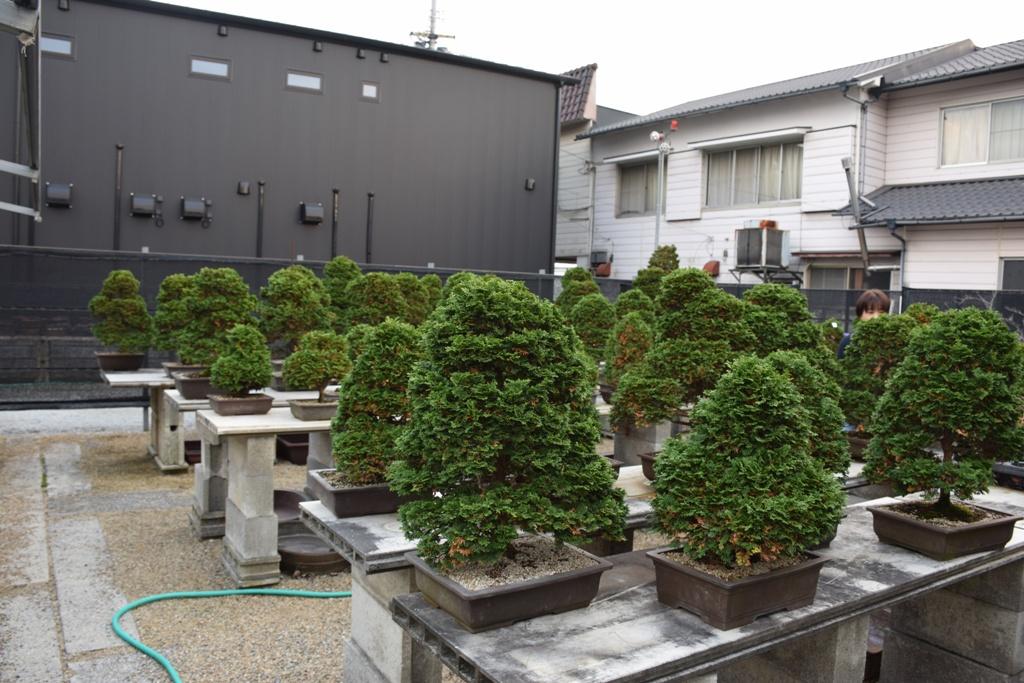 Voyage au Japon, à Kinashi Dsc_0407