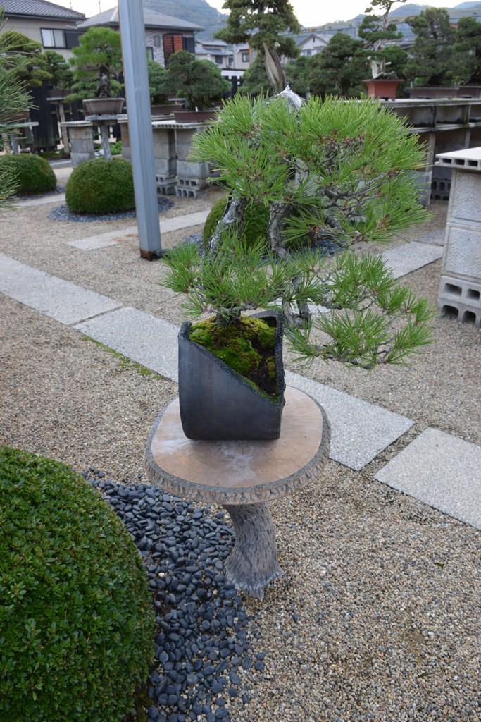 Voyage au Japon, à Kinashi Dsc_0467