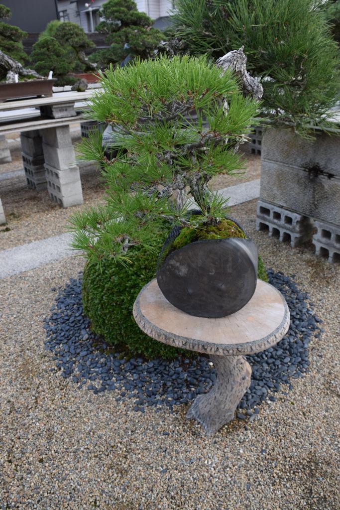 Voyage au Japon, à Kinashi Dsc_0469