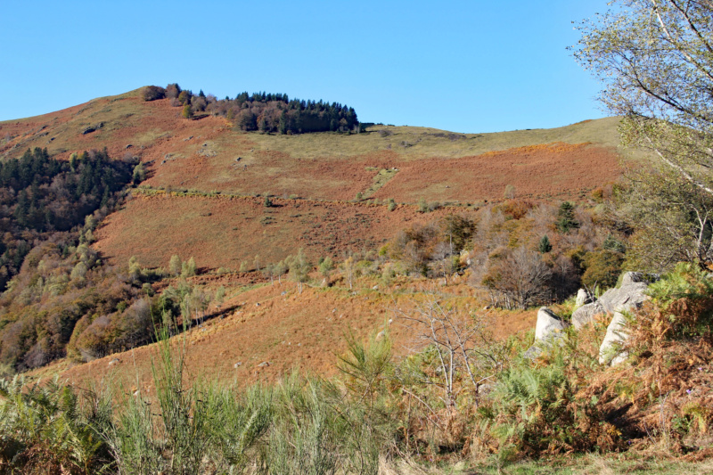 Tons d'automne Img_1840