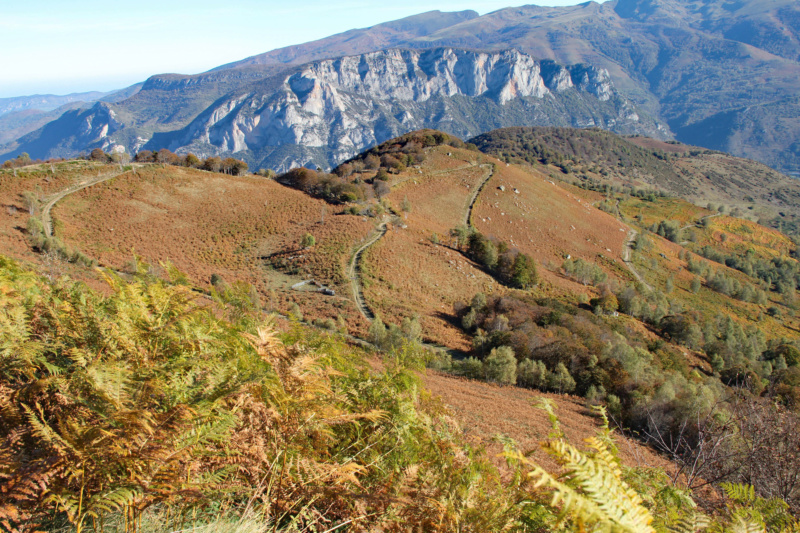 Tons d'automne Img_1841