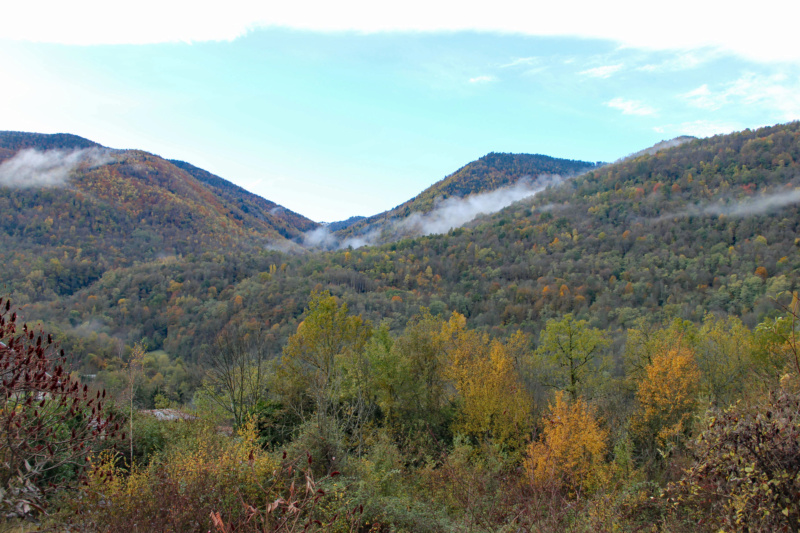 Tons d'automne Img_1842