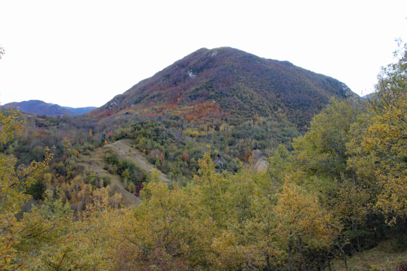 Tons d'automne Img_1846
